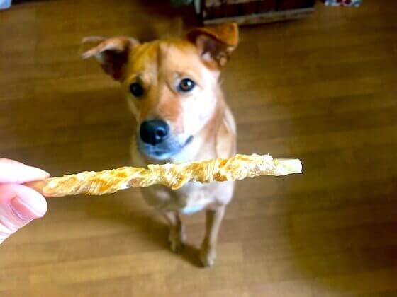 肉巻きガム食べたい犬