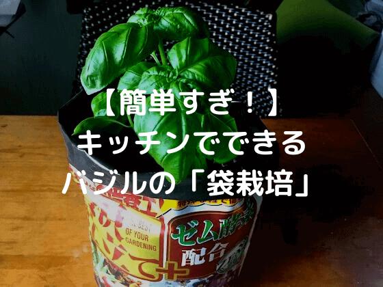 バジルの袋栽培
